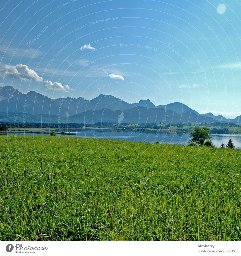 riviera royal IV Gras Sommer Naturgesetz Wiese grün Umwelt Wolken Wildnis Himmel Grünfläche Berge u. Gebirge Landschaft Pflanze Firmament
