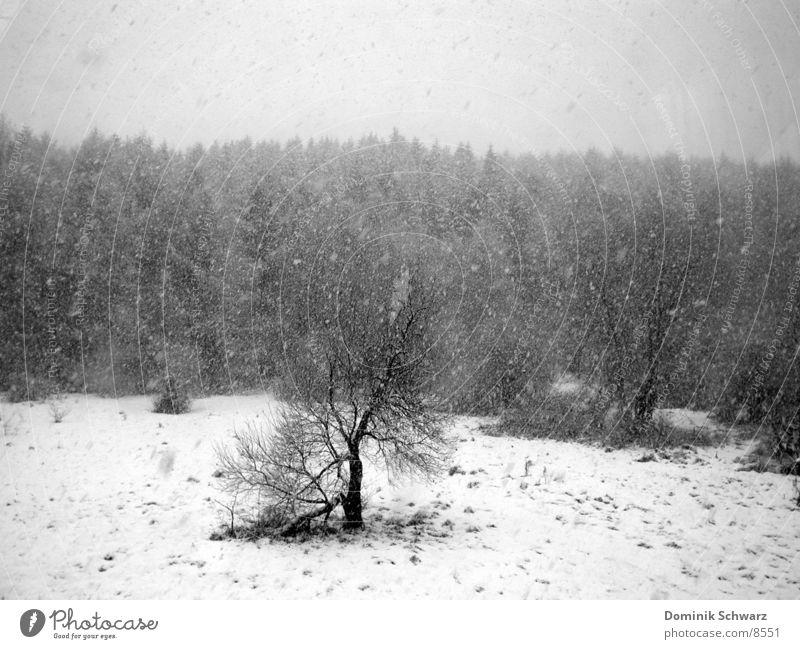 Tristesse weiß Baum Winter schwarz Wald Schnee Wiese grau trist trüb laublos
