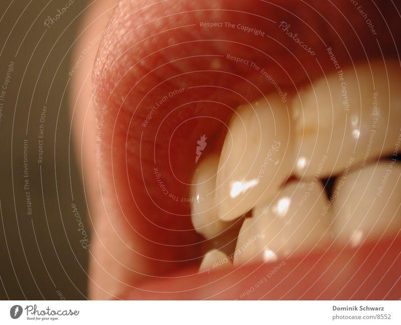 Zähne zeigen Mensch Mund Lippen Oberlippe Schneidezahn Unterlippe