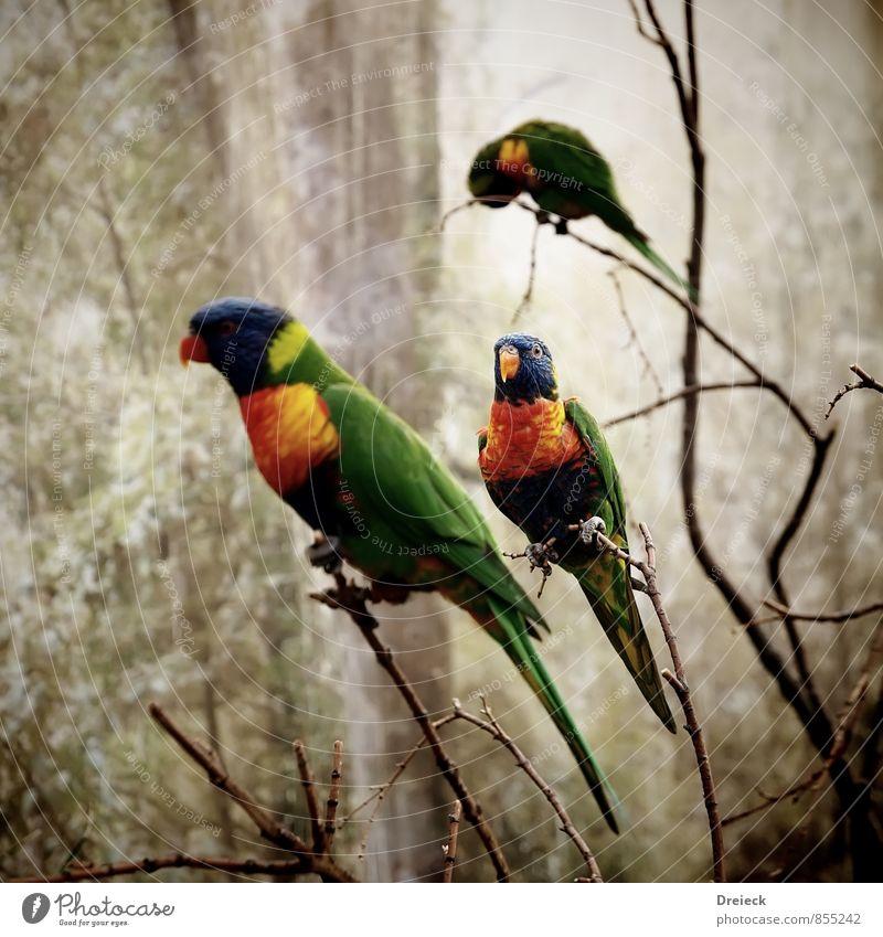 3x Bunt Natur blau grün Farbe Tier gelb fliegen Vogel orange Flügel Zoo exotisch Tierliebe Papageienvogel