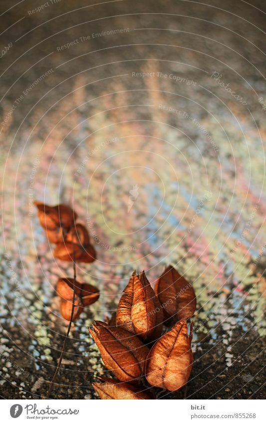Käpsele Ferien & Urlaub & Reisen Pflanze Farbe Freude Herbst Spielen Glück Feste & Feiern Kunst Schule Freizeit & Hobby Dekoration & Verzierung Geburtstag