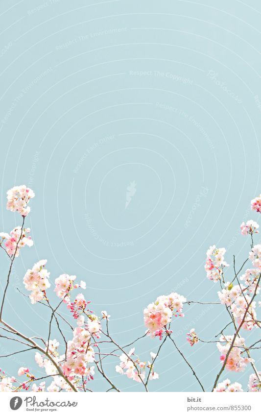 Frühling komm bald wieder Himmel Natur blau Pflanze Sommer Baum Blume Blüte Glück Feste & Feiern rosa Dekoration & Verzierung Geburtstag Lebensfreude Hochzeit
