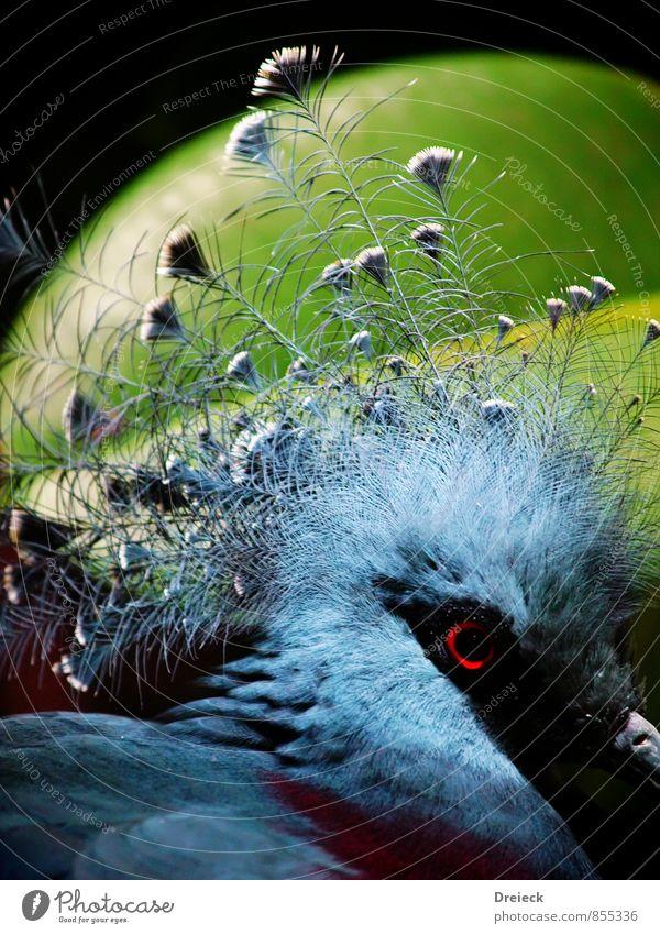 Blumentopfkopf blau grün Tier schwarz Vogel Wildtier Feder Tiergesicht silber