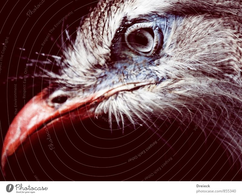 Auge + Schnabel = Vogel blau weiß rot Tier grau braun orange Wildtier authentisch Feder Tiergesicht silber