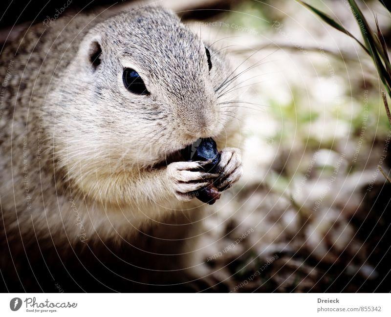 snack time Natur Tier Umwelt Essen grau Wildtier niedlich Fell Tiergesicht Zoo füttern Nagetiere Krallen