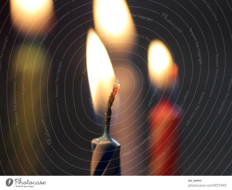 Kerzenflamme Weihnachten & Advent rot ruhig Wärme Gefühle Religion & Glaube Glück Feste & Feiern Stimmung Zusammensein Zufriedenheit Häusliches Leben leuchten