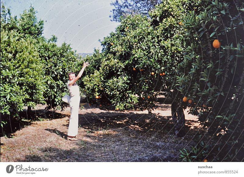 orangen Mensch Frau Natur alt Sommer Baum Umwelt Erwachsene Orange 45-60 Jahre Klima Schönes Wetter Landwirtschaft zeigen Interesse Griechenland