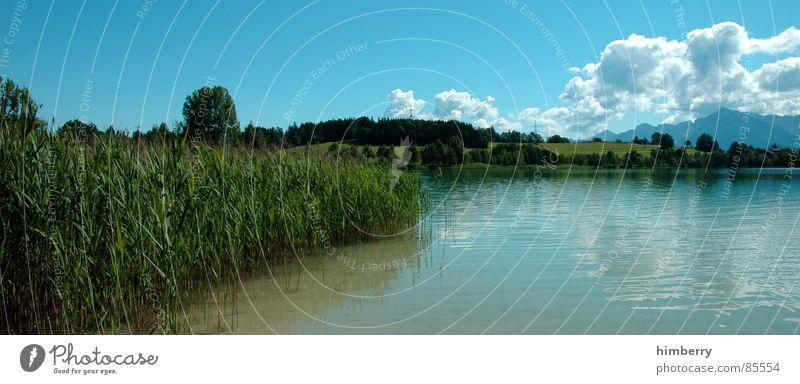 riviera royal VI Natur Himmel grün Pflanze Sommer Wolken Wiese Gras Berge u. Gebirge Landschaft Umwelt Wildnis Grünfläche Firmament Naturgesetz