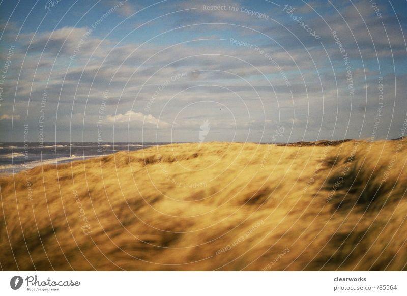 lieblingsplatz Gras Meer Sturm Rasen Strand Küste Stranddüne Dänemark Landschaft Himmel starker wind