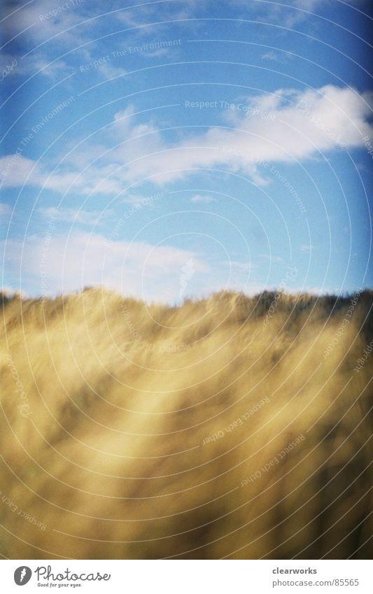 Goldrausch Himmel Strand Wolken Gras Küste gold Rasen Sturm Stranddüne Grasland Dänemark Lichteinfall