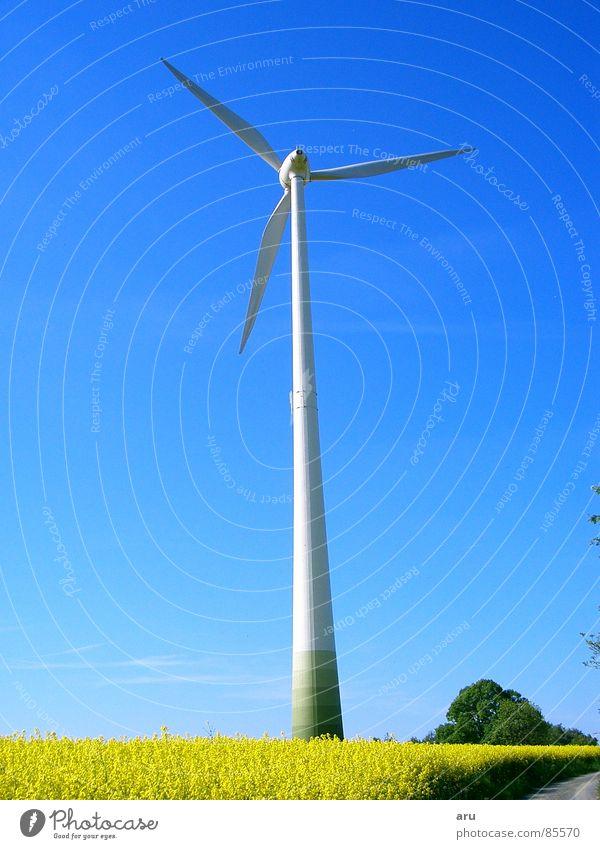 Windrad im Rapsfeld Natur Himmel Sommer Bewegung Wind Windkraftanlage Raps Rapsfeld