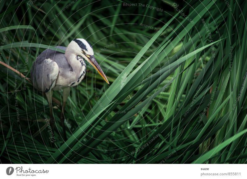 Herr Strese im Schlummerland Umwelt Natur Landschaft Tier Seeufer Wildtier Vogel 1 stehen warten ästhetisch authentisch fantastisch natürlich wild grün