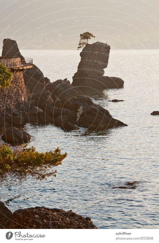 Einküstenbaum Natur Meer Landschaft ruhig Küste außergewöhnlich Felsen Wellen Italien Bucht Riff Felswand Felsvorsprung Ligurien Felsküste Küstenstraße