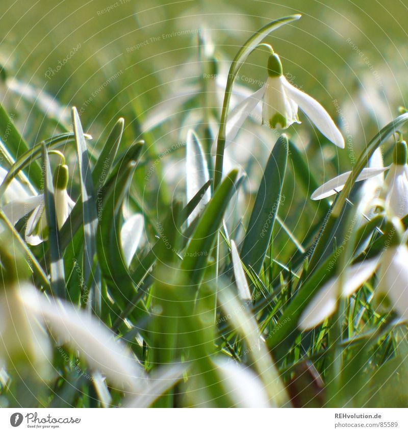 Frühling 2 Natur Blume grün Pflanze Freude Wiese Blüte Gras Garten Stein Rasen Blühend Halm Aktien aufwachen