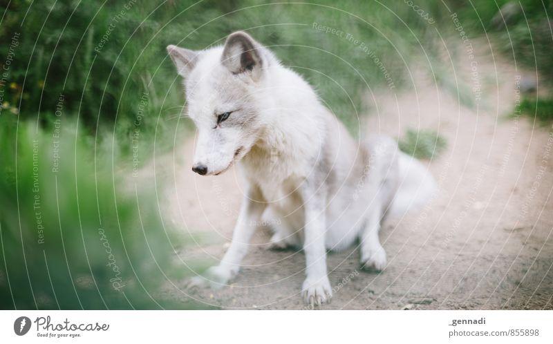 What Does He Say Hund Ein Lizenzfreies Stock Foto Von Photocase