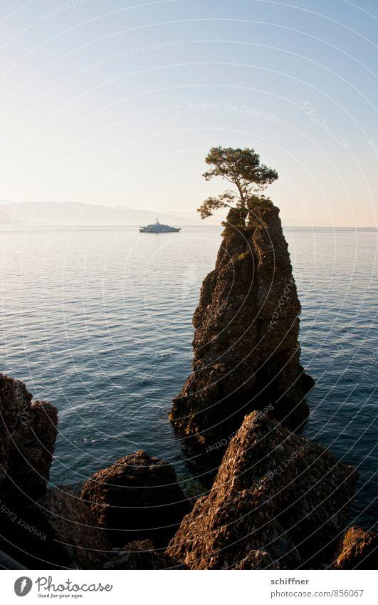Der Baum und Lady Beatrice Landschaft Wolkenloser Himmel Schönes Wetter Felsen Wellen Küste Bucht Meer Schifffahrt Jacht Motorboot ästhetisch schön
