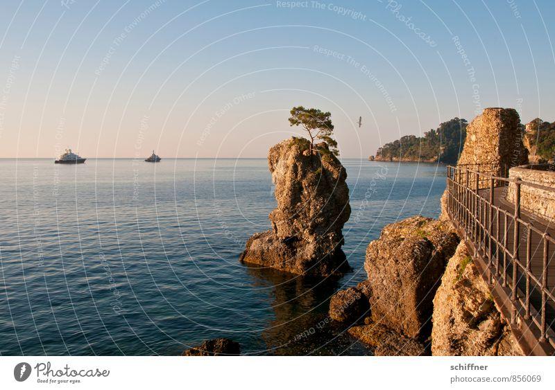 Möwe Himmel Baum Meer Landschaft Berge u. Gebirge Küste Wege & Pfade Felsen Wellen ästhetisch Schönes Wetter Italien Wolkenloser Himmel Treppengeländer