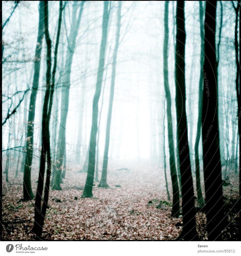 Ein Männlein steht im Walde Holzmehl dunkel Blatt Herbst ungewiss Angst Nebel Trauer Einsamkeit Herbstbeginn Ödland Sorge Panik Waldlichtung Nebelschleier