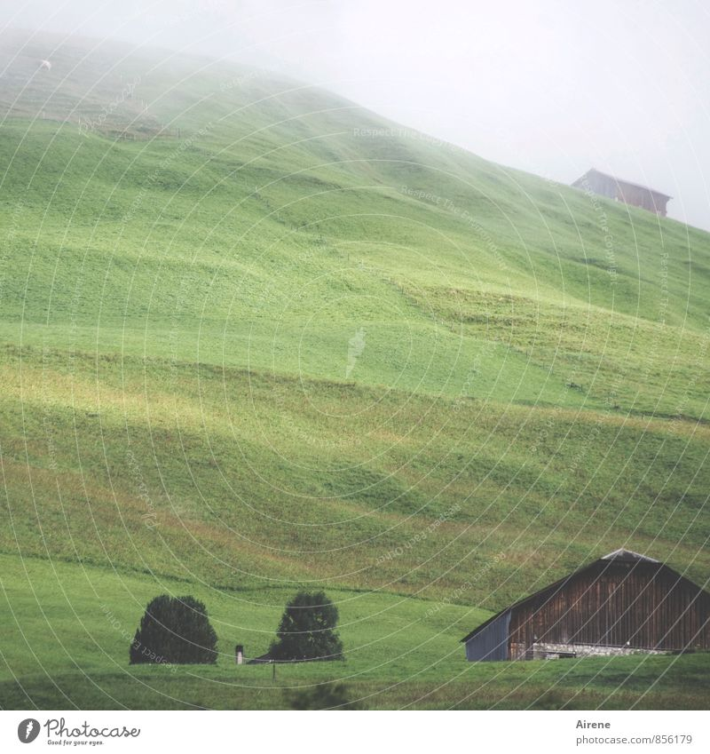 vernebelt Natur grün Einsamkeit Landschaft ruhig Berge u. Gebirge Zufriedenheit Tourismus Wetter Nebel hoch Ausflug Hügel Niveau Sehnsucht Alpen