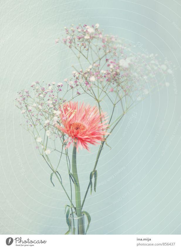 Blume Umwelt Natur Pflanze Frühling Sommer Blüte Blühend blau rosa Frühlingsgefühle Romantik schön Duft Blumenstrauß Muttertag frisch Dekoration & Verzierung
