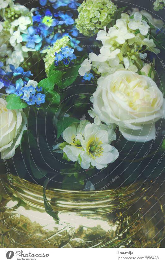 prachtvoller Blumenzauber Natur blau Pflanze schön weiß Blume Umwelt Stil glänzend elegant gold Dekoration & Verzierung Gold Macht Kitsch Rose