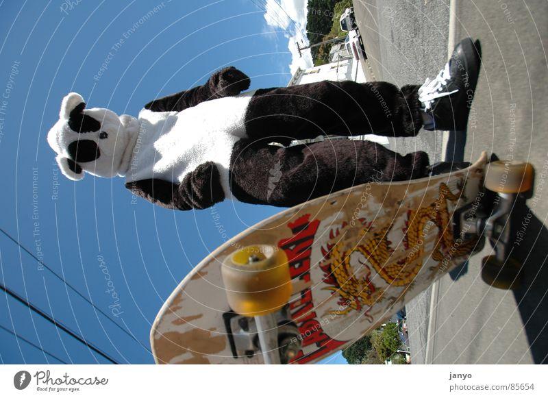 Skatebär Panda Skateboarding Sport Jugendkultur Funsport fun Karnevalskostüm
