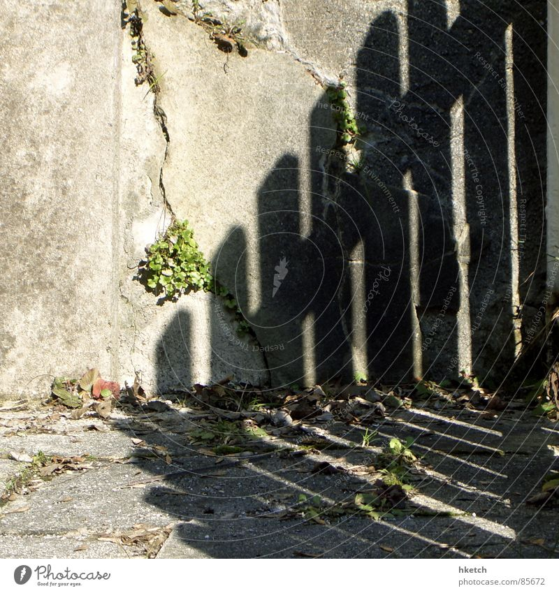 Zaungastspiel Mauer Holz morsch Wand brechen Schatten Schattendasein Am Rand verdunkeln Furche Riss verfallen Detailaufnahme Himmelskörper & Weltall Sonne Stein