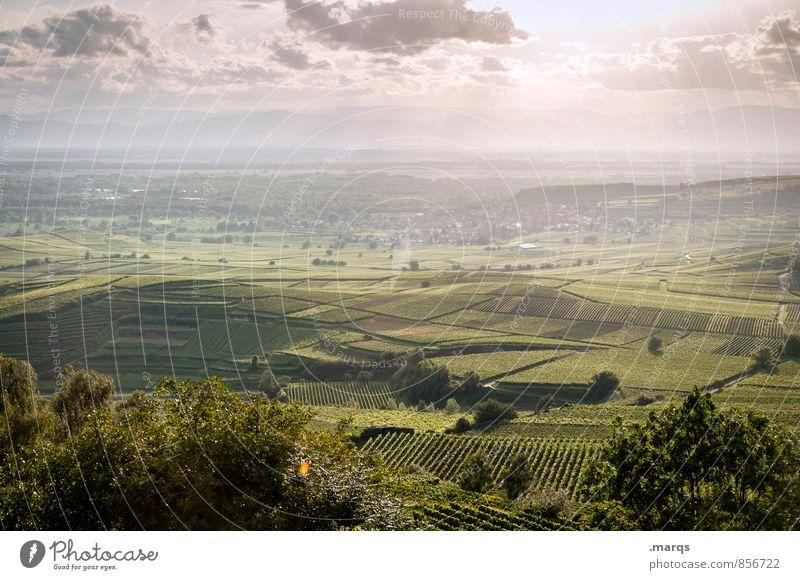 Weinland Tourismus Ausflug Ferne Umwelt Natur Landschaft Himmel Wolken Horizont Sommer Herbst Klima Schönes Wetter Feld Weinberg Weinbau schön Stimmung