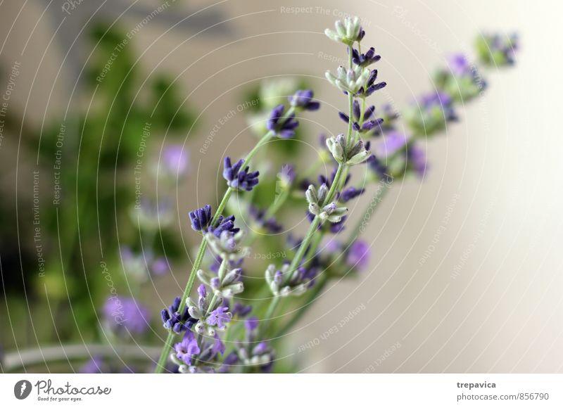 *** schön Körperpflege Kosmetik Parfum Creme Gesundheit Gesundheitswesen Alternativmedizin Fitness Wellness Leben harmonisch Wohlgefühl Zufriedenheit Erholung