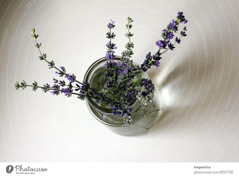 **************** Natur Pflanze schön Wasser Sommer Erholung Blume ruhig Umwelt Leben Blüte Frühling Lifestyle Zufriedenheit Wellness Wohlgefühl