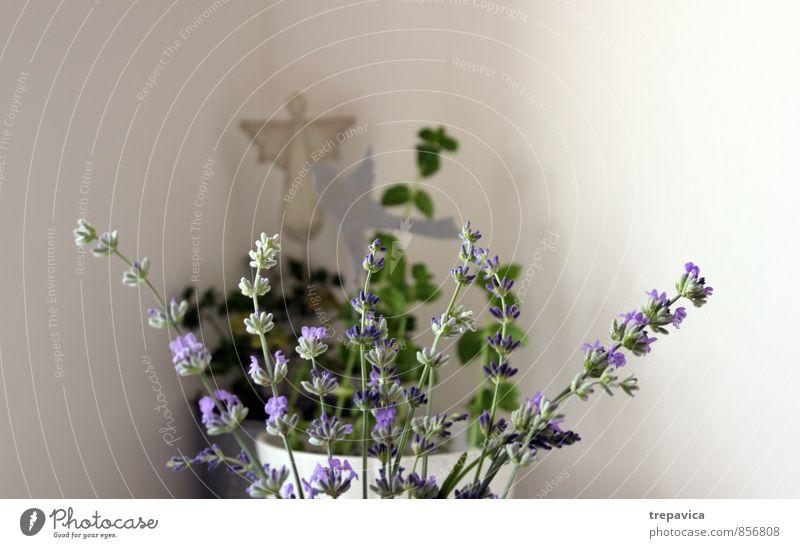 *********************************** schön Körperpflege Umwelt Natur Pflanze Blume Blatt Blüte Grünpflanze Nutzpflanze Topfpflanze Garten Zeichen Engel Duft