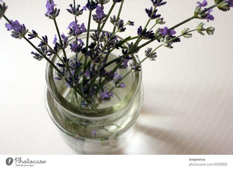 ******* Lifestyle schön Körperpflege Kosmetik Parfum Creme Gesundheit Gesundheitswesen Alternativmedizin Wellness Leben harmonisch Wohlgefühl Zufriedenheit