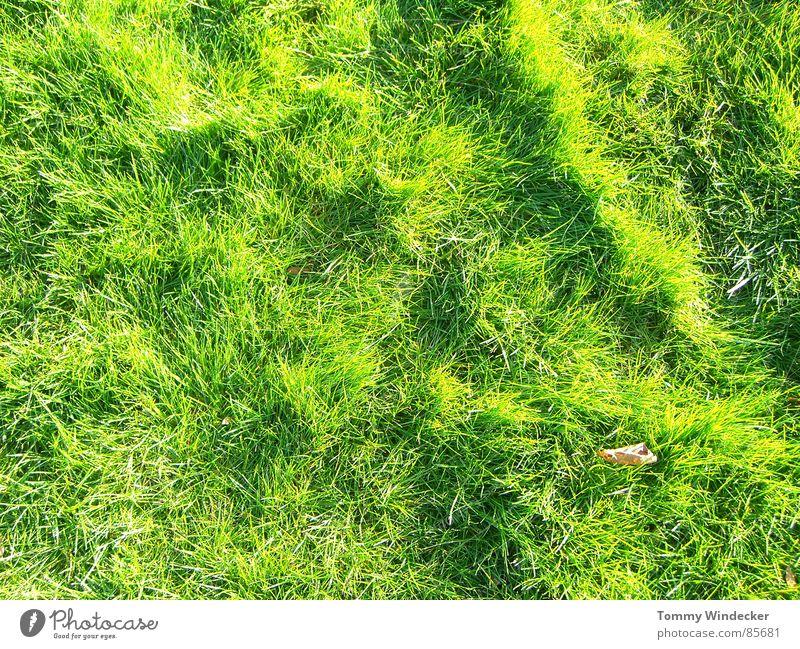 Grünphase Natur grün Pflanze Sommer Farbe Landschaft Wiese Wärme Gras Frühling Garten Park Deutschland Feld nass Wachstum