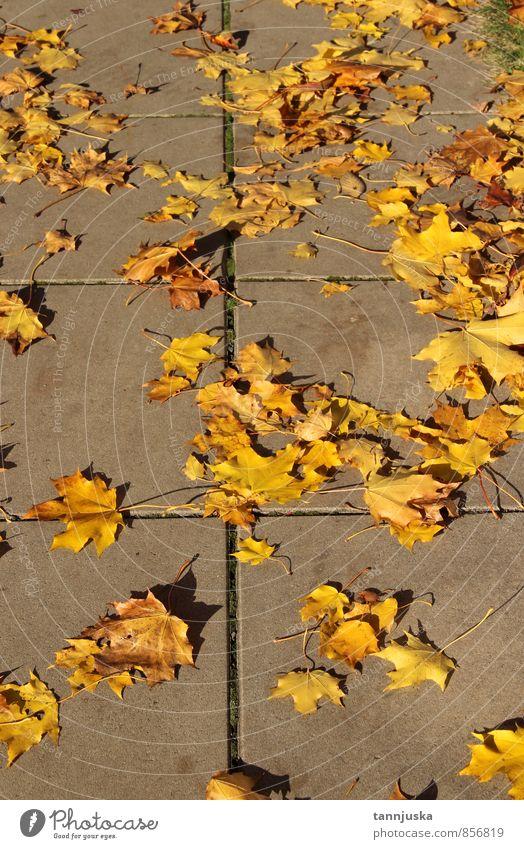 """Herbst Natur Landschaft Pflanze Wetter Schönes Wetter Blatt Garten Park Stadt fallen mehrfarbig gelb orange Stimmung """"Herbst Herbst,"""" herbstlich Außenaufnahme"""