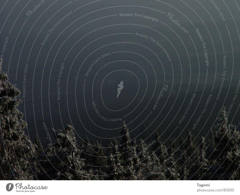 Wo Schneegeister wohnen ... Winter Wald dunkel Landschaft Gefühle grau Stimmung Nebel Tanne Jahreszeiten Tal unheimlich Nadelbaum Harz geisterhaft Mittelgebirge