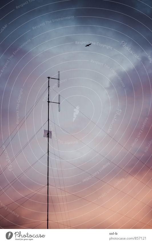 Himmel Stadt Wolken Tier sprechen fliegen Vogel Häusliches Leben groß Technik & Technologie hoch Kommunizieren Telekommunikation Industrie Netzwerk