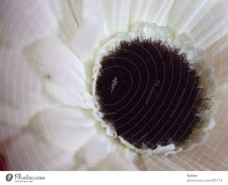 Blütenplastik Natur weiß Blume Pflanze Dekoration & Verzierung