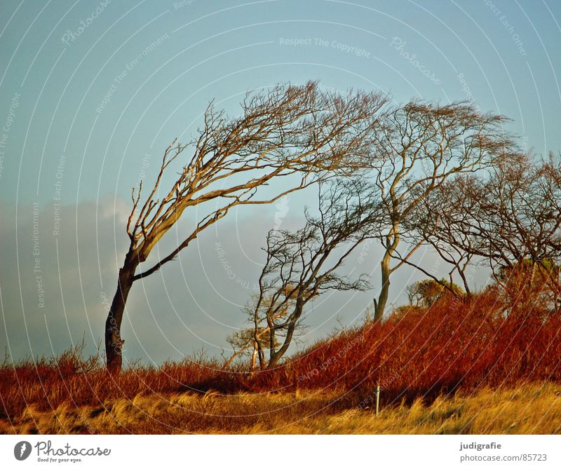 Windflüchter Natur schön Himmel grün Winter Strand Wald Herbst Wiese Gras Landschaft Küste Baum Wind Sträucher Leidenschaft