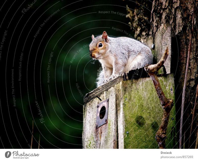 Warten wir es ab grün weiß Tier Holz braun oben warten niedlich Tiergesicht Eichhörnchen