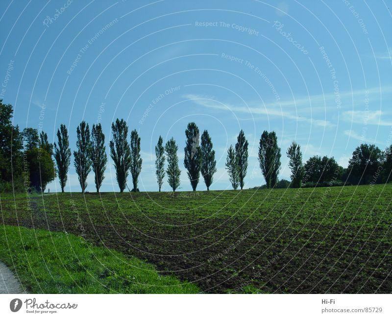 Bäume Straße Landschaft Feld Getreide Landwirtschaft Bauernhof Reihe Ackerbau Museum Allee Weizen zerkleinern Mühle Ranch Altertum Feldarbeit