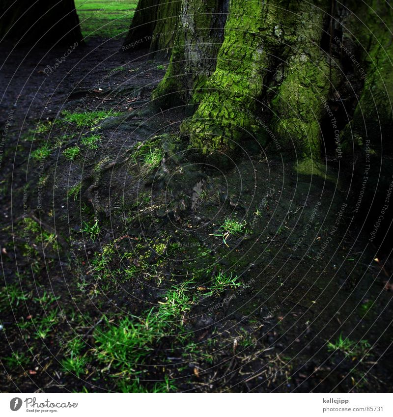 wurzelbehandlung Natur grün Pflanze Sommer Blatt Wald Umwelt Gras Erde Luft Regen Erde Wetter Energiewirtschaft Wachstum Sträucher