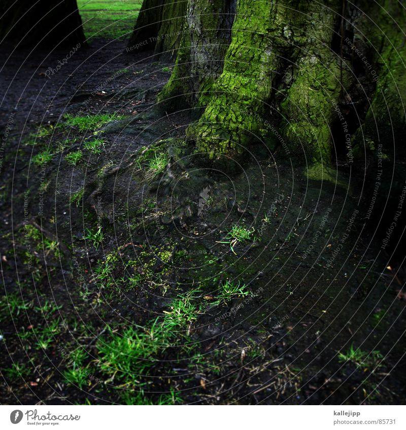 wurzelbehandlung Natur grün Pflanze Sommer Blatt Wald Umwelt Gras Erde Luft Regen Wetter Energiewirtschaft Wachstum Sträucher