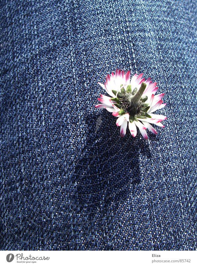 Träum was schönes... Tod Gänseblümchen kopflos schlafen ruhig Blütenblatt Stengel rosa zart kaputt entgegengesetzt verkehrt träumen Pflanze Frühling Sommer