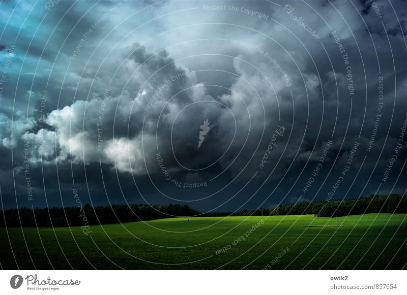 Cumulus mit Grünstreifen Ferne Umwelt Natur Landschaft Pflanze Himmel Wolken Gewitterwolken Horizont Klima Wetter Schönes Wetter Wind Gras Wiese Wald