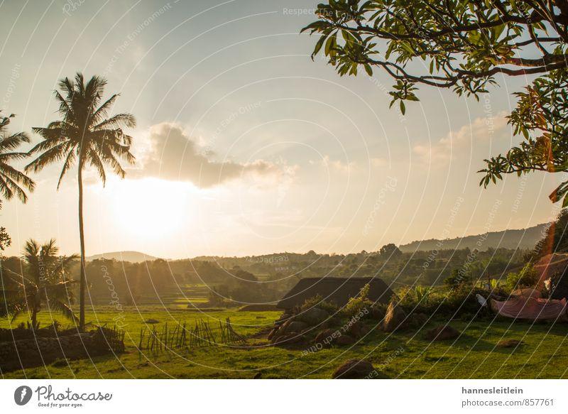 Yellagiri Landschaft Baum Palme Feld Indien Dorf Haus bescheiden Armut Horizont Shalom-Foundation Farbfoto Außenaufnahme Menschenleer Textfreiraum Mitte Abend