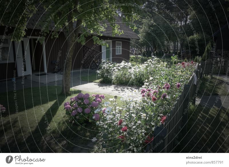 Hausgarten Garten Sommer Baum Blume Gras Sträucher Grünpflanze Einfamilienhaus Fassade Fenster Tür Dach Zaun Stein Holz Blühend Erholung träumen verblüht