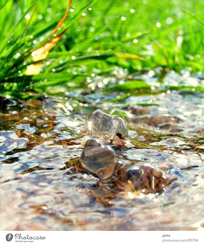 Bächlein Natur Wasser grün Wiese Gras Gesundheit frisch Sauberkeit Klarheit Bach Erfrischung Quelle ursprünglich Born