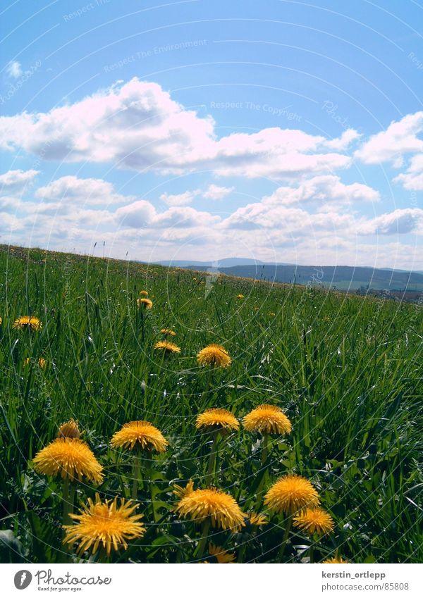 Blick zum Inselsberg Blume Wolken Wiese Berge u. Gebirge Frühling Landschaft Löwenzahn