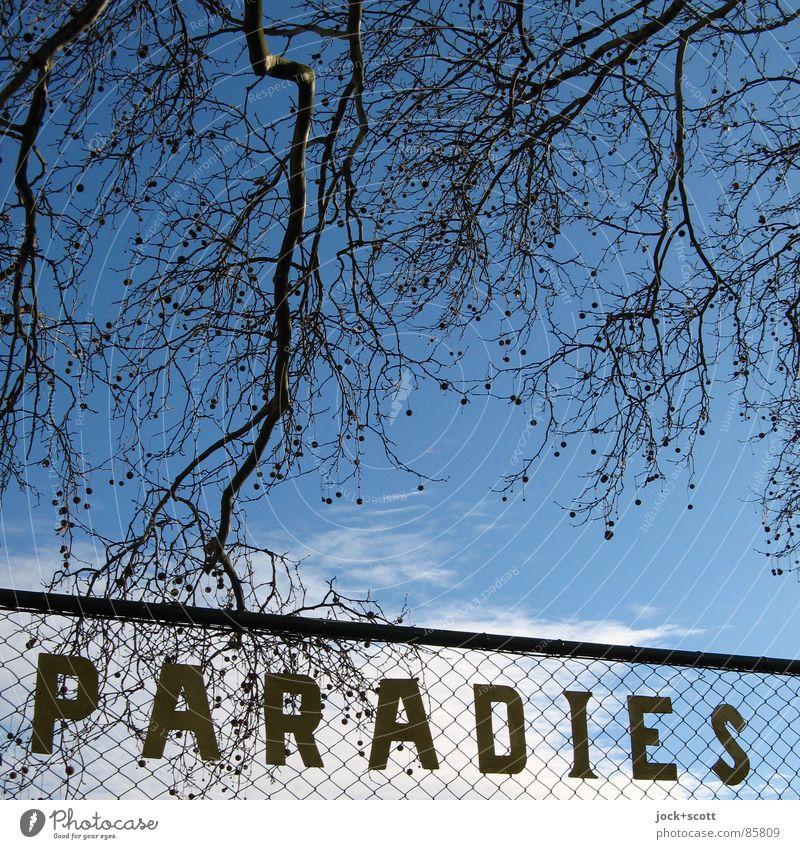 PARADIES: gefunden vor Kleingarten Stil Kultur Wolken Winter Zweige u. Äste Kleingartenkolonie einfach retro blau Stimmung Solidarität Sehnsucht Frieden Idylle