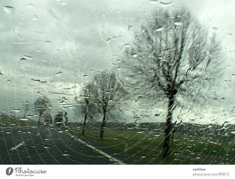 Nachschub ... Autofahren Landstraße Allee Fahrbahnmarkierung Straßenrand Regen nass Pfütze Windschutzscheibe Durchblick Straßenverkehr schemenhaft Autofahrer